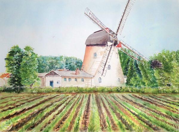 Wittingen Ohrdorf (Germany) Old Dutch Mill